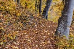 Droga przemian przez lasu zdjęcie royalty free