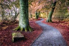 Droga przemian przez lasu terenu w jesieni, Fotografia Stock