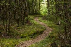 Droga przemian przez lasu w Nowa Zelandia Obraz Royalty Free