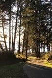 Droga przemian przez sosen francuz plaża, BC Obrazy Stock