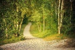Droga przemian przez zielonego lasu Zdjęcia Royalty Free