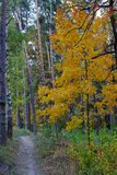 Droga przemian w jesień klonie i lesie Obraz Stock