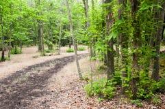Droga przemian w lesie Zdjęcie Royalty Free