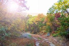 Droga przemian w lesie Fotografia Royalty Free