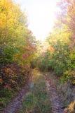 Droga przemian w lesie Zdjęcia Stock