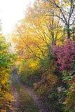 Droga przemian w lesie Zdjęcie Stock