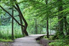 Droga przemian w lesie Fotografia Stock