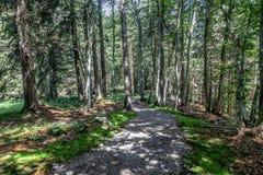 Droga przemian w lesie Obraz Royalty Free