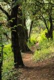 Droga przemian w lesie tropikalnym Zdjęcia Royalty Free