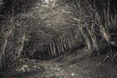 Droga przemian w niewyraźnym lesie obrazy royalty free