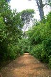 Droga przemian w parku zdjęcia stock