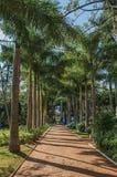 Droga przemian z brukowem wśród luksusowego ogródu pełno wysocy drzewa i drzewka palmowe, w słonecznym dniu przy São Manuel Fotografia Stock