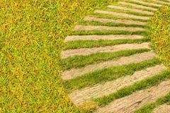 Droga przemian z naturalną zieloną trawą obrazy stock