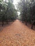 Droga przemian zaświecająca jesieni słońcem Obraz Royalty Free
