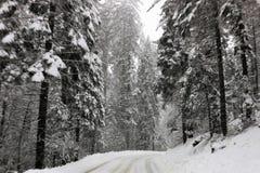 Droga przez śniegu zakrywał redwood drzewa w sekwoja parku narodowym Kalifornia obrazy stock