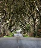 Droga przez Ciemnych żywopłotów unikalna bukowego drzewa tunelowa droga n Ballymoney, Północny - Ireland Gra tron lokacja obrazy stock