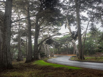Droga przez cyprysowego lasu Obrazy Royalty Free