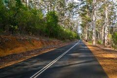 Droga przez gumowego drzewa lasu Fotografia Royalty Free