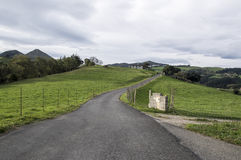 Droga przez krzaka Zdjęcia Stock