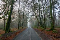 Droga Przez Mgłowych drewien zdjęcie stock