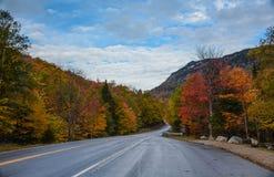 Droga przez parka Fotografia Royalty Free