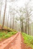 Droga przez plantaci Fotografia Royalty Free