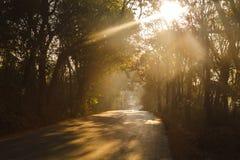 Droga przez ranku lasu Zdjęcie Royalty Free