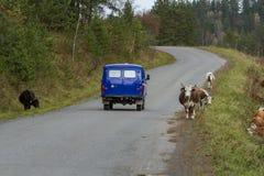 Droga przez Syberyjskiego lasu daleka wioska samochodowa Europe mapy zabawki podróż Syberyjska natura Zdjęcia Royalty Free