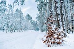 Droga przez zamarzniętego lasu z śniegiem Obrazy Stock