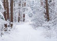 Droga przez zamarzniętego lasu z śniegiem Zdjęcie Stock