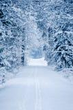 Droga przez zamarzniętego lasu z śniegiem Obraz Stock