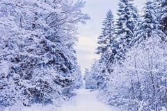 Droga przez zamarzniętego lasu z śniegiem Obraz Royalty Free