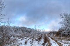 Droga przez zamarzniętego lasu Obrazy Royalty Free