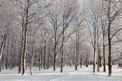 Droga przez zamarzniętego parka, witer Obrazy Royalty Free