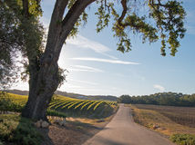 Droga przy świtem przez Paso Robles winniców w Środkowej dolinie Kalifornia usa Zdjęcia Stock