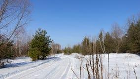 Droga przy krawędzią las Zdjęcia Stock