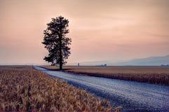 Droga pszenicznym polem obraz stock
