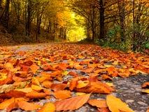 Droga spadać liście obraz stock