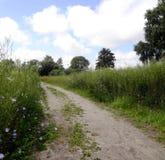 Droga wśród błękitnych kwiatów Obraz Stock