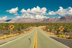 Droga w Arizona pustyni przez Joshua drzew lasowych zdjęcie stock