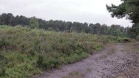 Droga w Cannock pościg lesie, UK zbiory wideo