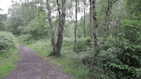 Droga w Cannock pościg lesie, UK zbiory