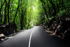 Droga w dżungli Obraz Royalty Free