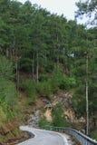 Droga w góry sosny lasach Obrazy Royalty Free