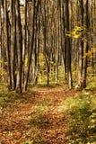 Droga w jesień las Obrazy Royalty Free