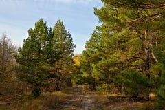 Droga w jesień lesie fotografia stock