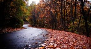 Droga w jesień lesie Zdjęcie Stock