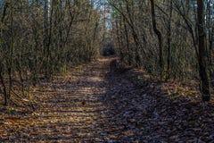 Droga w jesień lesie Obrazy Stock