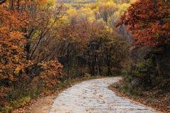 Droga w jesieni Zdjęcie Stock