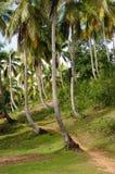 Droga w kokosowego drzewa Dominicana republikę Obrazy Stock